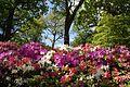 Azaleas in a Landscape Isabella Plantation.jpg