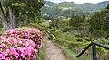 Azalias at Furnas. - panoramio.jpg