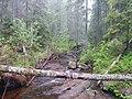 Bäck i Skuleskogens Nationalpark 2.jpg