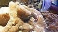 Béziers - Aquarium Polygone 10.jpg