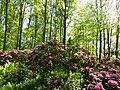 Bad Sassendorf – Kurpark - Rhododendronpark am 6. Mai 2016 - panoramio - giggel.jpg