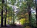Baia Sprie, Romania - panoramio (28).jpg