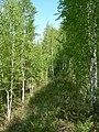 Bakalinsky District, Republic of Bashkortostan, Russia - panoramio.jpg