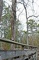 Bald Cypress Trail First Landing State Park-boardwalk-decking-railing-3 (33051837512).jpg