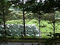 Bales Viewed From Pant Da Woods - geograph.org.uk - 998556.jpg