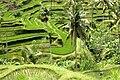 Bali 0710a.jpg