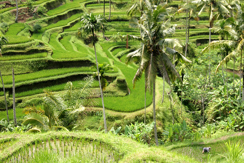 The Magic of Bali – The Incredible Island of Bali