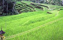 Ekosistem Wikipedia Bahasa Indonesia Ensiklopedia Bebas