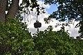 Baltā stārķa ligzda Nr.1723, Skrundas pagasts, Skrundas novads, Latvia - panoramio.jpg