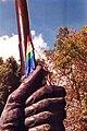 Bandera Colores.jpg