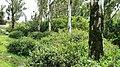 Bandipur Tiger Reserve - panoramio (4).jpg