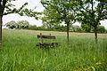 Barntrup - 2015-05-22 - LIP-005 Hecken- und Gruenlandkomplex auf der Sonnenborner Hochflaeche und dem Knappberg (20).jpg