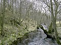 Barrow Burn and Barrow Burn Wood - geograph.org.uk - 799894.jpg