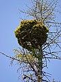 Baum-Moor.jpg