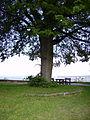 Baum Giechburg.jpg