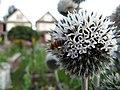 Bee on blooming thistle (939955669).jpg