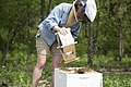 Beekeeper 2017 Honeybee Conservancy, College of DuPage.jpg