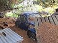 Beetle in the pine needles... (7981992355).jpg