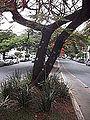 Belo Horizonte 001.JPG