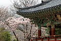 Beomeosa temple - panoramio (1).jpg