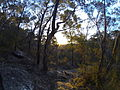 Berowra Valley Sunset (9603840741).jpg