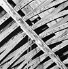 beschilderde ribben en balken van voormalige h.geestkapel - alkmaar - 20005769 - rce