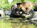 Beto Carrero Zoo - panoramio.jpg