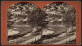 Bird's-eye View in Congress Park, from Robert N. Dennis collection of stereoscopic views.png