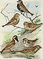 Bird-lore (1910) (14755101692).jpg