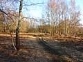 Bisley Common - geograph.org.uk - 1743772.jpg