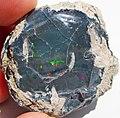 Black precious opal (Tertiary; Wollo Province, Ethiopia) 4 (48163614272).jpg