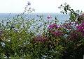 Blanes Botanischer Garten 4.JPG