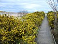 Boardwalk at Donmouth Nature Reserve - geograph.org.uk - 401724.jpg