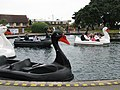Boating Lake for Swans - geograph.org.uk - 917097.jpg