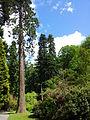 Bodnant Garden Frühsommerimpression 2.jpg