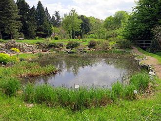 Botanical Garden of TU Darmstadt - Lake in the Botanical Gardens