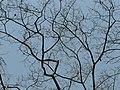 Brahma's Banyan (3512279797).jpg