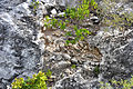 Breccia-filled dissolution pit (Sandy Point Northeast roadcut, San Salvador Island, Bahamas) 2 (16442546566).jpg