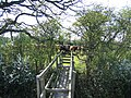 Bridge Stile and Cows near Highfield Farm - geograph.org.uk - 412288.jpg