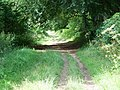 Bridleway, Kingston Lacy - geograph.org.uk - 1471095.jpg