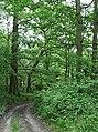 Bridleway around Shirlett High Park, Shropshire - geograph.org.uk - 454652.jpg