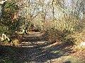 Bridleway at edge of Foxhills - geograph.org.uk - 1093817.jpg