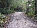 Bridleway crossing woodland track in Birchgrove Wood - geograph.org.uk - 1532339.jpg