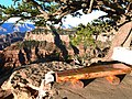 Bright Angel Point overlook^^ Grand Canyon North Rim ^^ A bench over the Earth story - panoramio.jpg