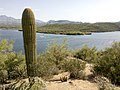 Butcher Jones Trail - Mt. Pinter Loop Trail, Saguaro Lake - panoramio (115).jpg