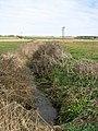 Buttercups (Ranunculus) growing by drain - geograph.org.uk - 1216321.jpg