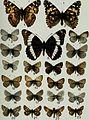 Butterflies and moths of Newfoundland and Labrador - the macrolepidoptera (1980) (20324344179).jpg