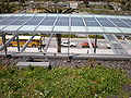 CA Academy of Sciences Living Roof 8.JPG