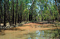 CSIRO ScienceImage 4472 Redorange algal scum in Barmah forest billabong.jpg