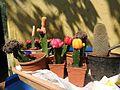 Cactus grafting-2-shevaroy nursery-yercaud-salem-India.jpg